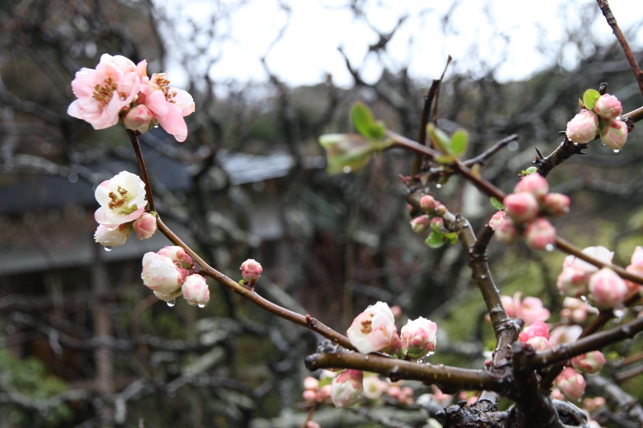 Kevätsade Hasederan alueella