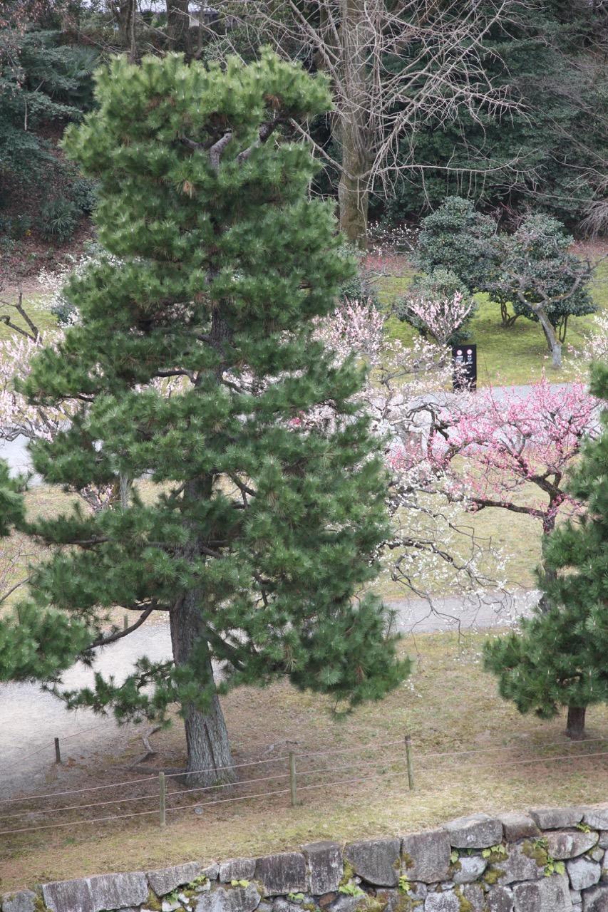 Nijoon linnan puistossa kevään aavistus